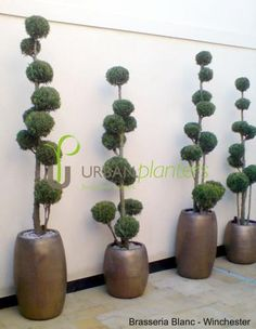 Don't panic it's ceramic: 10 reasons to choose natural stone planters - Urban Planters Topiary Plants, Topiary Garden, Topiary Trees, Garden Art, Garden Planters, Stone Planters, Ceramic Planters, Urban Planters, Office Plants