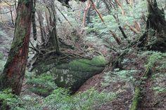 永田歩道の巨岩。