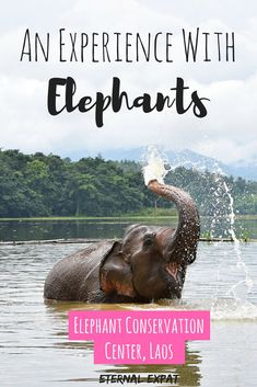 My experience at the Elephant Conservation Center Laos - a wonderful elephant sanctuary in South East Asia that I highly recommend visiting and supporting!