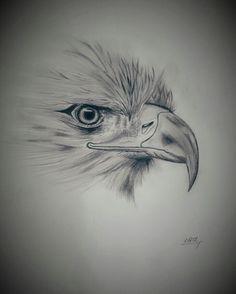 Bird Pencil Drawing, Eagle Drawing, Pencil Painting, Color Pencil Art, Outline Drawings, Bird Drawings, Pencil Art Drawings, Art Drawings Sketches, Animal Drawings