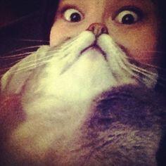 'Cat Beard' Craze Takes Internet By Storm   Bored Panda