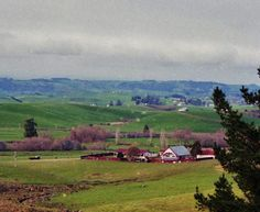Countryside outside Auckland, New Zealand in 1998.  Photography by David E. Nelson