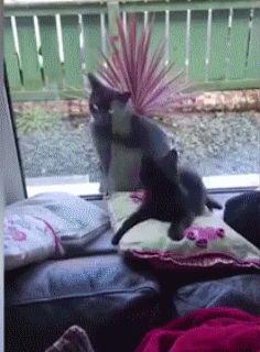 Kitten Attacks Indifferent Cat