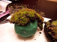 Living Moss Balls . . . our project for next week!