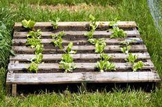 Europaletten im Garten verwenden gras pflanzen