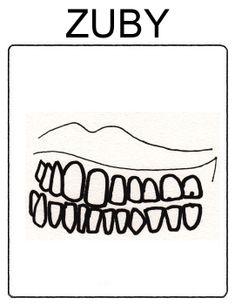 Části těla - zuby