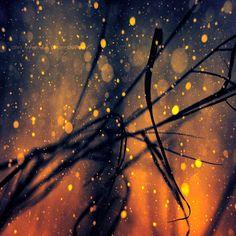 Alsafi by wchild.deviantart.com