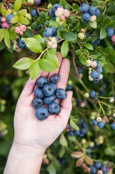 Natural Garden, Fungi, Garden Inspiration, Garden Plants, Flower Power, Blueberry, Diy And Crafts, Flora, Home And Garden