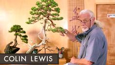 Advance your bonsai skills! Join bonsai artist Colin Lewis, and transform your tree — from subtle shaping to dramatic character changes. #onlineclass