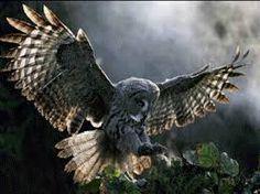 Картинки по запросу совы фотографии