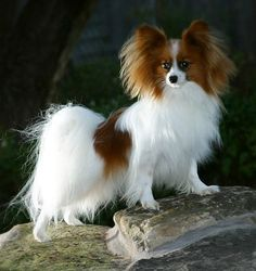 My favorite breed of dog!