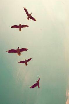 softer wings, bottom