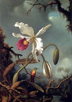 Martin Johnson Heade White Brazilian Orchid painting for sale, this painting is available as handmade reproduction. Shop for Martin Johnson Heade White Brazilian Orchid painting and frame at a discount of off. Botanical Drawings, Botanical Prints, Art Floral, Illustration Botanique, Illustration Art, Martin Johnson Heade, Impressions Botaniques, Hudson River School, Canvas Art Prints
