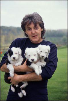 Paul McCartney and English sheepdog puppies!