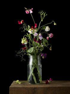 Kevin Dutton Still-Life Photograph - Lathryus 2 - Botanical Photographic Print Style Century 2017 Old Masters Kevin Dutton, Bonsai, Ikebana Arrangements, Floral Arrangements, Rise Art, Buy Art Online, Botanical Flowers, Arte Floral, Still Life
