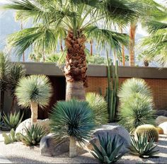 A dry garden in California's Coachella Valley, designed by Marcello Villano, pairs fan palm and golden barrel cactus with varieties of yucca and aloe. See more in Required Reading: Succulents, The Ultimate Guide. Photograph courtesy of Succulents. Succulent Landscaping, Tropical Landscaping, Modern Landscaping, Front Yard Landscaping, Landscaping Ideas, Landscaping Software, Desert Landscaping Backyard, Palm Trees Landscaping, Tropical Garden Design