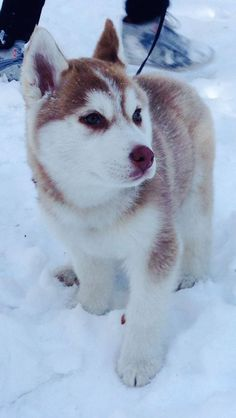 I've come up with some tips for dog owners and their pups to stay safe in the snow.