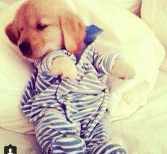 Cute doggie!!<3