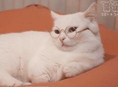 안경벗는 고양이.gif