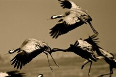 Extremadura es reconocida en Europa como un destino de referencia en el turismo ornitológico.  http://www.gobex.es/comunicacion/noticia?idPub=13776#.VBAqDC5_sZj… pic.twitter.com/VXGPKEakVJ