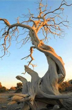 Awesome Photography (Plants and Trees) Weird Trees, Plantas Bonsai, Twisted Tree, Unique Trees, Old Trees, Nature Tree, Tree Forest, Photo Tree, Belle Photo