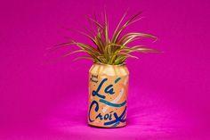 APRICOT LA CROIX planter | Etsy