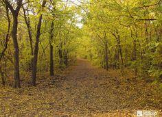 A legszebb erdők Magyarországon/Beautiful forests in Hungary Beautiful Forest, Guam, Hungary, Country Roads, Travel, Viajes, Trips, Traveling, Tourism