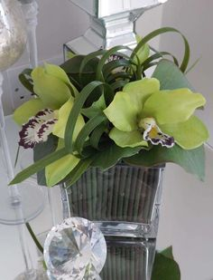 green Orchids with Looped Grass in Glass Cube | RTfact | Artificial Silk Flowers