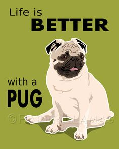 I'll find out if this is true in a couple years when we get a black pug puppy, which we'll name Pugsy.