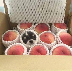 Que buena pinta tienen estos melocotones... son monísimos!!!!   Feliz martes os deseamos desde HAPPY MASCOTAS!!!