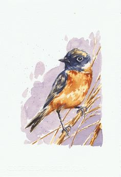 Tarabilla Asiática / Siberian stonechat .Watercolor By Isabel MariaSG on Waterford paper 300 grs.