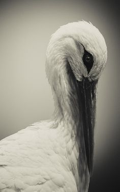 White Stork by Shay Wax on 500px