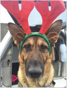 Merry Christmas from Police Dog Falon