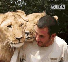 Beautiful dangerous wild animals pets of Africa: Beautiful dangerous African Lions