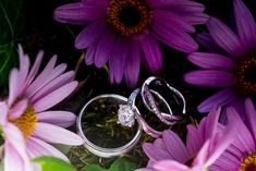 Wedding rings and purple daisies. A real wedding by Couple Photography Waterford Castle, Wedding Shoes, Wedding Rings, Purple Daisy, Couture Cakes, Floral Arch, Windy Day, All Craft, White Dogs