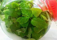 Eva In Tasteland: Λικέρ Δυόσμου.... Lettuce, Spinach, Watermelon, Diy And Crafts, Fruit, Vegetables, Food, Meal, The Fruit