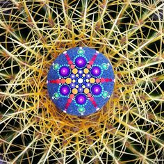 Spectacular Mandalas Emerge from Hypnotic Colorful Dots on Ordinary Stones - My Modern Met