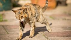 Poppy becomes world's oldest cat at grand old age of 24
