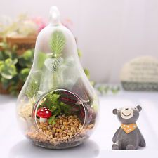 Home Decor Pear Crystal Glass Vase Planter Hydroponic Pot Terrarium Container