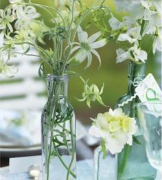 Bunches of white wild flowers
