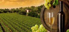 Vinařství - Hustopeče