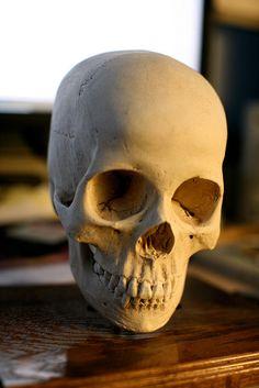 skull reference by shimmy13, via Flickr
