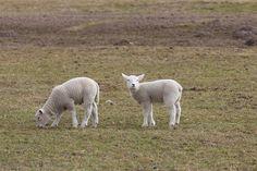 Idealne miejsce dla twojej owcy! Przekonaj się: http://puszystaowca.pl/wypas-owiec-jozefow/