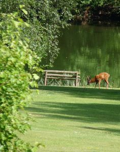 Stag having a wander and drink by the lake Ice Houses, New Forest, Southampton, Hampshire, Winchester, Over The Years, Acre, Wander, Woodland