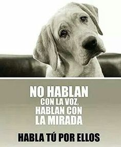 Sé su voz, no al maltrato animal!