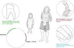 Tracing the dynamic life story of a Bronze Age Female : Scientific Reports : Nature Publishing Group