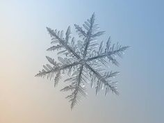 Macro photos of snowflakes show impossibly perfect designs : TreeHugger