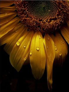 SUNFLOWER (flower/seeds/oil) Fire/Sun - Vitality  strength. Life  health. Wishes  happiness.