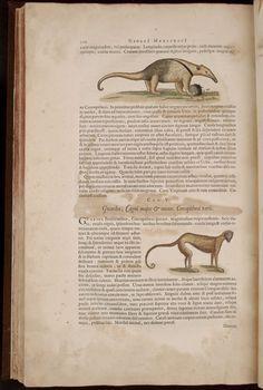 Image of text canæ 226 Books To Buy, Alchemist, Book 1, Jaguar, Image
