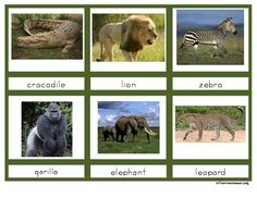 Animals of Africa 3-Part Cards {FREE}. Go with your study of Ancient Egypt